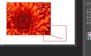 Как изменить размер изображения в Фотошопе